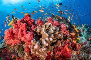 Nước là môi trường sống của nhiều loài sinh vật
