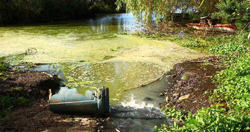 Xả thải nước ô nhiễm gây ra phú dưỡng