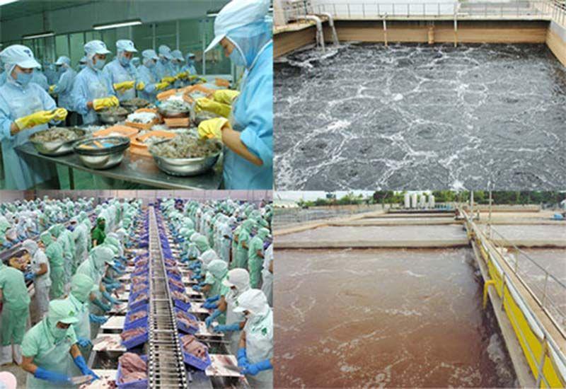 Xử lý nước thải chế biến thuỷ hải sản